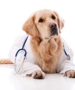 Veterinari e Animali
